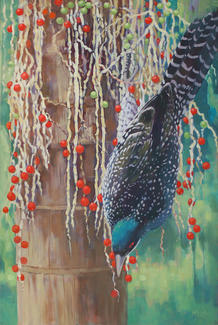 Common Koel in Palm Tree SOLD