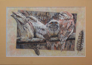 Frogmouth Family 2nd Prize taree Open Art exhibition SOLD