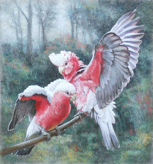Galahs enjoying a Shower SOLD