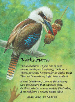 Koookaburra - from our favourite Birds