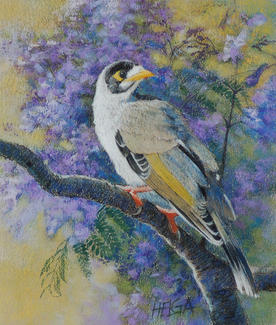 Noisy Miner in Jacaranda SOLD