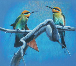 Rainbow Bee-eaters SOLD