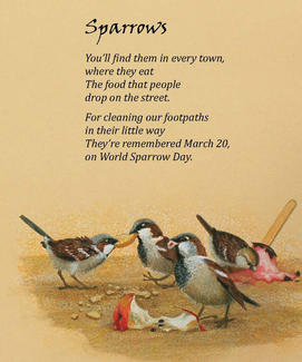 Sparrows - from our favourite Birds