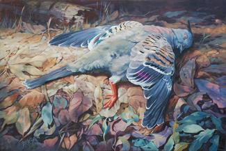 Still life - crested Pigeon 2nd prize Taree Open Art Exhibition SOLD