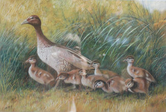 Under Mother's watchful Eye - Wood Ducks 70 x 50 cm